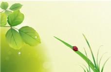 清新绿叶海报背景