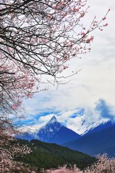 樱花下的山脉