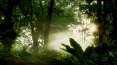 树林中的雾气清晨有光