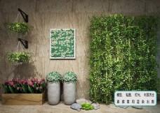 植物墙 藤蔓花艺植物 生态