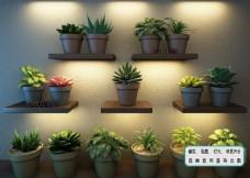 植物墙 室内花艺花苞 生态