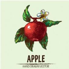 手绘苹果线稿