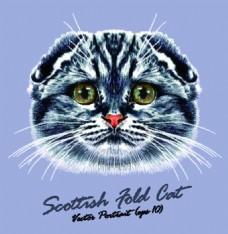折耳灰色宠物猫头像品种矢量