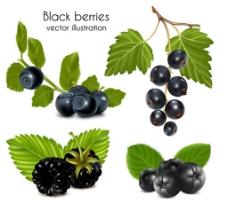 新鲜蓝莓矢量图