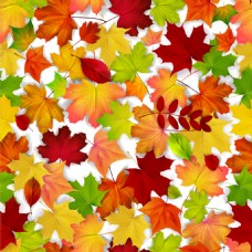 彩色枫叶背景