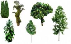 效果图树景观素材