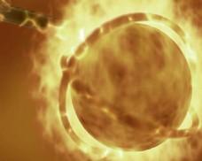 金色龙火焰视频素材