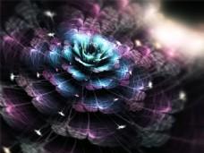 黑暗中的花朵背景图