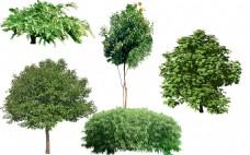 园林绿化植物树木图片png景观素材