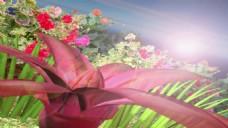 欧式婚礼花海视频背景