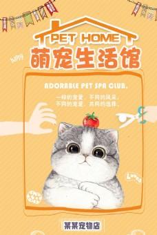 清新简约宠物海报
