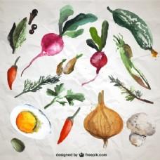 水彩蔬菜的收集