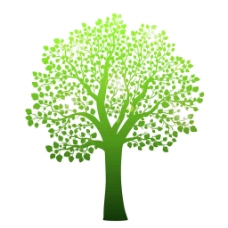 美丽绿树图片