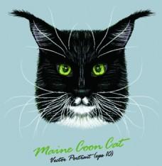 方脸猫咪宠物猫头像品种矢量