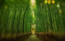 日本竹林背景图片素材
