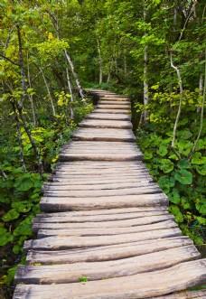 森林中的木栈道
