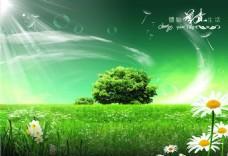 绿色春天唯美风景绿色雏菊背景墙装饰画