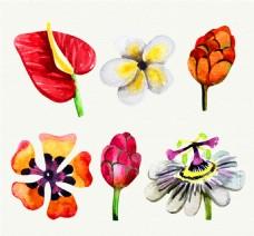 6款水彩绘花朵矢量素材