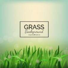 现实的草背景,背景虚化效果