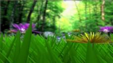 欧式婚礼草坪视频背景