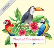 水彩绘热带鸟类和朱槿矢量图
