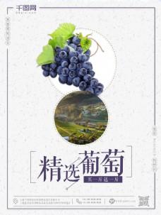 促销海报葡萄促销海报精选葡萄促销海报