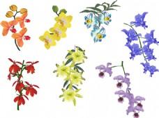 美丽的花朵插画