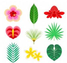 9款彩色热带花卉和叶子矢量素材