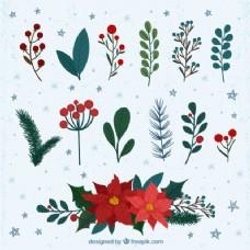 与其他冬季观赏植物一品红