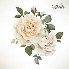 素色玫瑰花矢量印刷高清设计素材