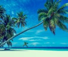 海滩椰树背景图