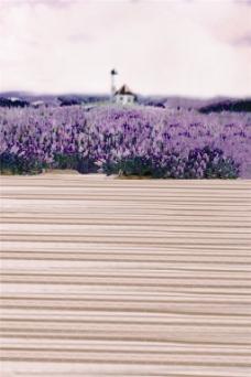 紫色花海H5背景