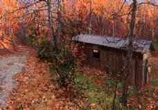 高清风景油画红色枫叶背景墙装饰画