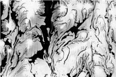 黑白树纹贴图