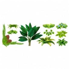 绿色的叶子收藏