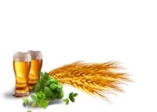 金色麦穗啤酒元素
