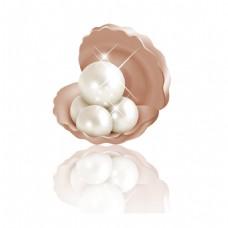 珍珠贝壳效果元素