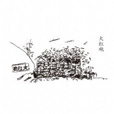 武夷山大红袍母树线描风景手绘