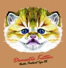 可爱黄色小猫宠物猫头像品种矢量