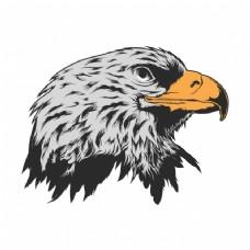 鹰头背景设计
