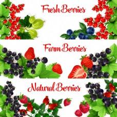 绿色健康水果海报卡片背景矢量