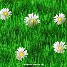 绿色的草和雏菊