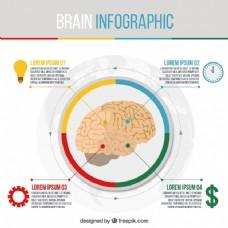 圆脑的信息图表模板