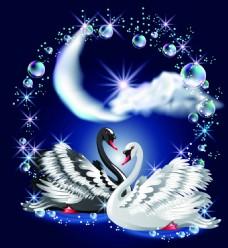 黑天鹅与白天鹅创意矢量动物插画