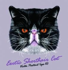 英短宠物猫头像品种矢量