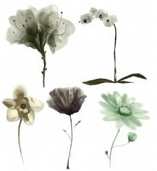 PSD源文件花朵素材水墨花朵手绘风格花朵