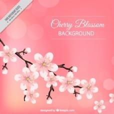 樱花的美丽和背景虚化背景的效果