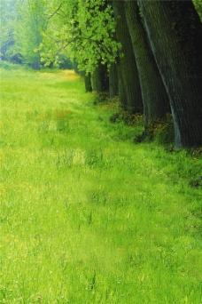 绿色草地H5背景图