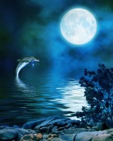 月亮下海中的海豚玄关装饰背景墙