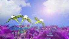 欧式婚礼花卉视频背景